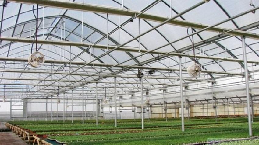 Tôn lấy ánh sáng cho nhà trồng rau sạch